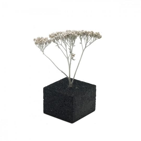 Дерево белое натуральное с кроной 7-10 см